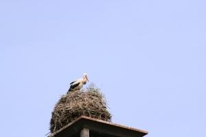 stork i sikte