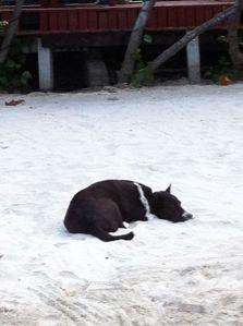hund i sanden