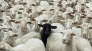 Det svarta fåret
